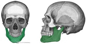 Front and side view of maxillary bone