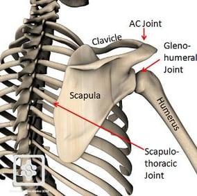 Bony representation of shoulder joint complex